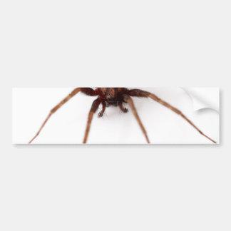 Big Scary Spider Bumper Sticker