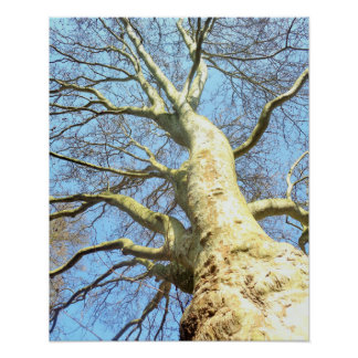 Big Sunny Tree Branches in Blue Sky, Poster