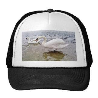 Big Swan Trucker Hats