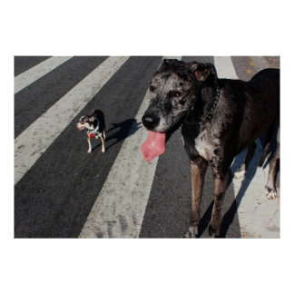 Big Tall Photo of Great Dane Chihuahua Dogs Poster
