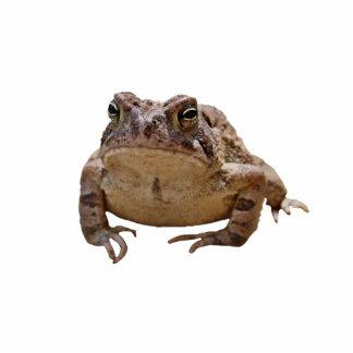 Big Toad Photo Sculpture Badge