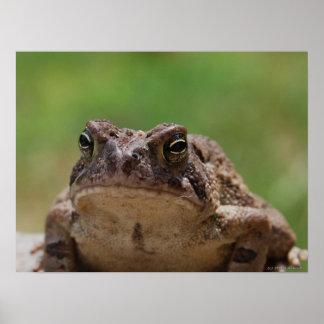 Big Toad Poster