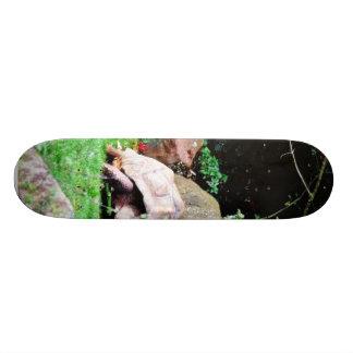 Big Turtle Skate Boards