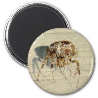 Big, Very, Scary, Hairy Spider 6 Cm Round Magnet