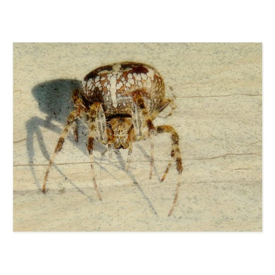 Big, Very, Scary, Hairy Spider Postcard