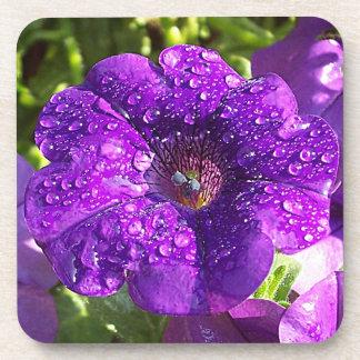 Big Wet Purple Petunia Flower Coaster Set 6