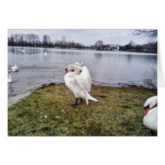 Big White Swan Stretching Wings Greeting Card