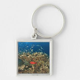 Bigeye hiding under hard coral, Kadola Island, Silver-Colored Square Key Ring