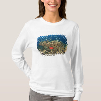 Bigeye hiding under hard coral, Kadola Island, T-Shirt