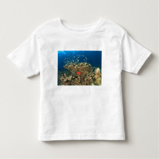 Bigeye hiding under hard coral, Kadola Island, Toddler T-Shirt