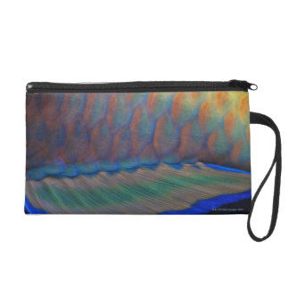 Bigeye Priacanthus hamrur, close-up of fin Wristlet Purse