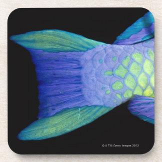Bigeye Priacanthus hamrur, close-up of tail Beverage Coasters
