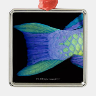 Bigeye Priacanthus hamrur, close-up of tail Christmas Ornament