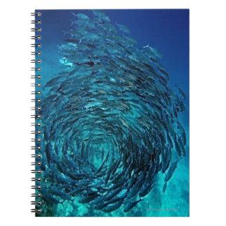 Bigeye trevally (Caranx sexfasciatus), swimming Notebook