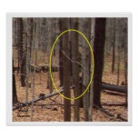 Bigfoot Behind Trees Poster