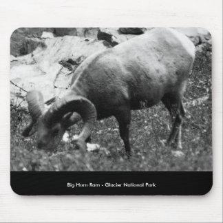 Bighorn_Ram_Grazing, Big Horn Ram - Glacier Nat... Mouse Pad