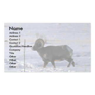 Bighorn sheep Adult ram Business Cards