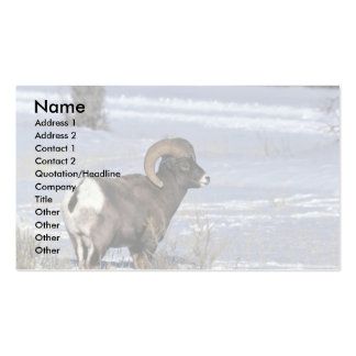 Bighorn sheep (Adult ram) Pack Of Standard Business Cards