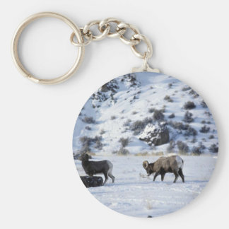 Bighorn sheep (Mating behaviour) Basic Round Button Key Ring