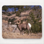 Bighorn sheep mousepads