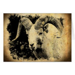 Bighorn Sheep with Attitude Greeting Card