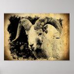 Bighorn Sheep with Attitude Print