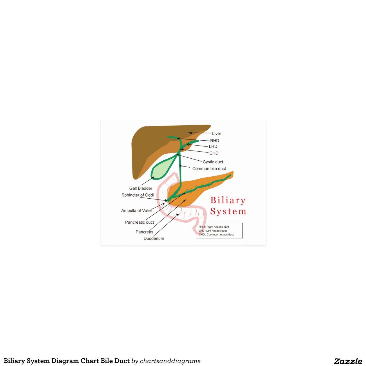 Biliary System Diagram Chart Bile Duct   Zazzle