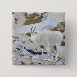 Billy goat, in Upper Enchantments 15 Cm Square Badge