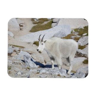Billy goat, in Upper Enchantments Magnet
