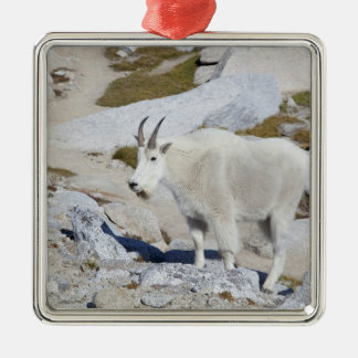 Billy goat, in Upper Enchantments Silver-Colored Square Decoration