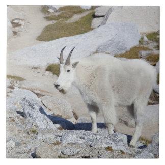 Billy goat, in Upper Enchantments Tile
