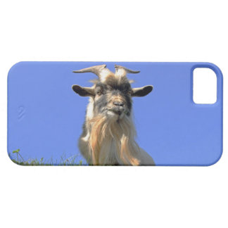 Billy Goat Photo iPhone 5 Cover
