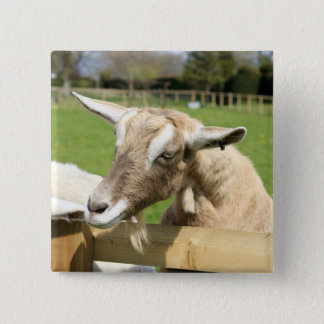 Billy the Goat Button Badge