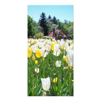 Biltmore Tulips Custom Photo Card