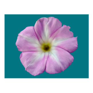 Bindweed #1 postcard