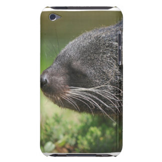 Binturong Bear iTouch Case Barely There iPod Case