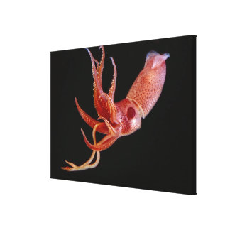 Bioluminescent Cock-eye Squid  (Histioteuthis hete Canvas Print