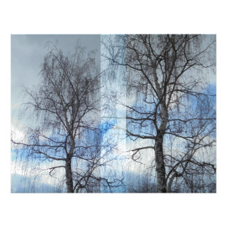 Birch. Approximation Photographic Print