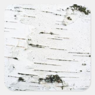 Birch bark square sticker