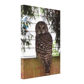 Birch Bay Owl Gallery Wrap Canvas