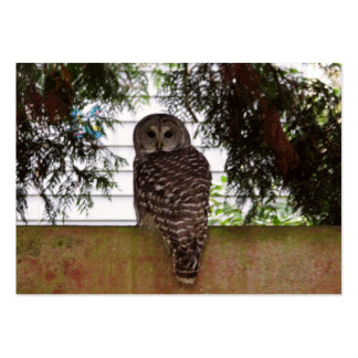Birch Bay Owl Pack Of Chubby Business Cards