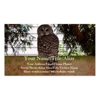 Birch Bay Owl Pack Of Standard Business Cards