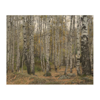 Birch Forest Photo  Wood Wall Art