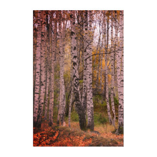 Birch Forrest Autumn Photo Acrylic Wall Art