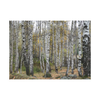 Birch Forrest Autumn Photo Single Canvas Print