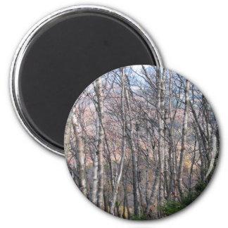 Birch Grove 6 Cm Round Magnet