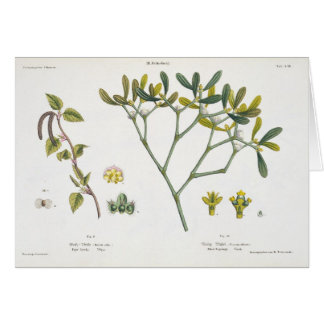 Birch (left) and Mistletoe (right), fig. 9 and 10 Card