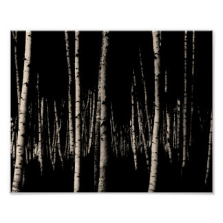 Birch Tree Forest in Sepia Poster