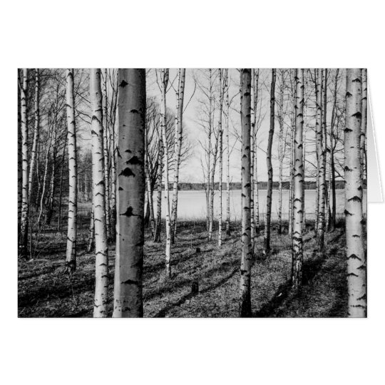 Birch trees forest by a lake in Finland