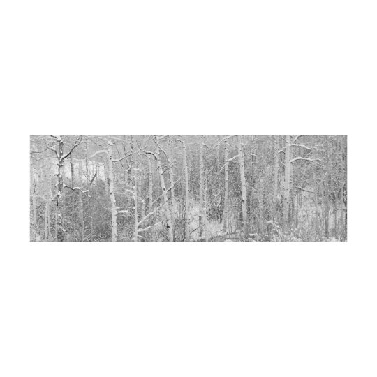 Birch Trees in Winter Canvas